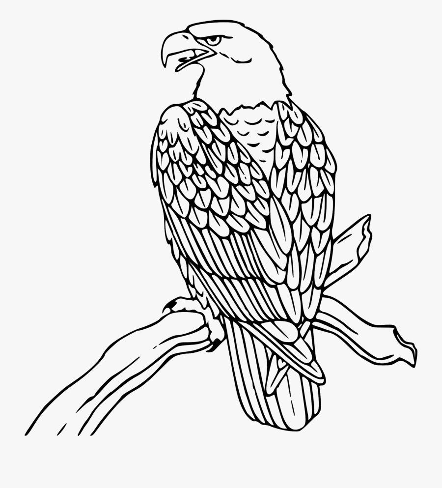 Eagle Image Clip Art - Eagle Black And White Clip Art, Transparent Clipart