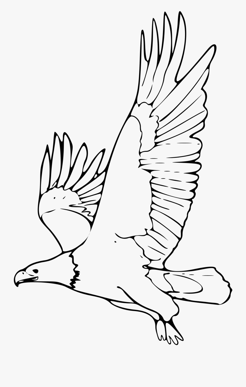 Clipart Coloring Book Bald Eagle 2 Remix - Dibujos De Animales En Peligro De Extincion, Transparent Clipart