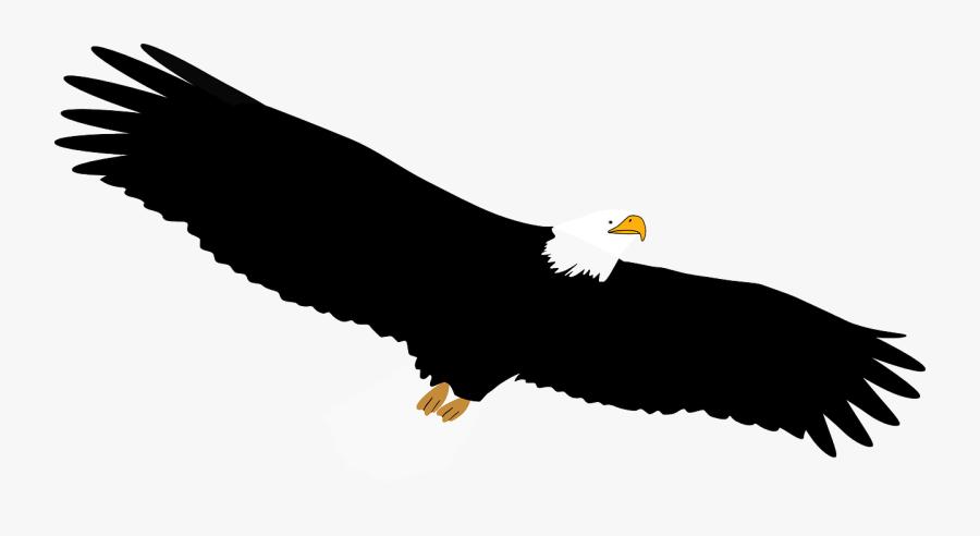 Bald Eagle,eagle,vulture - Bald Eagle, Transparent Clipart