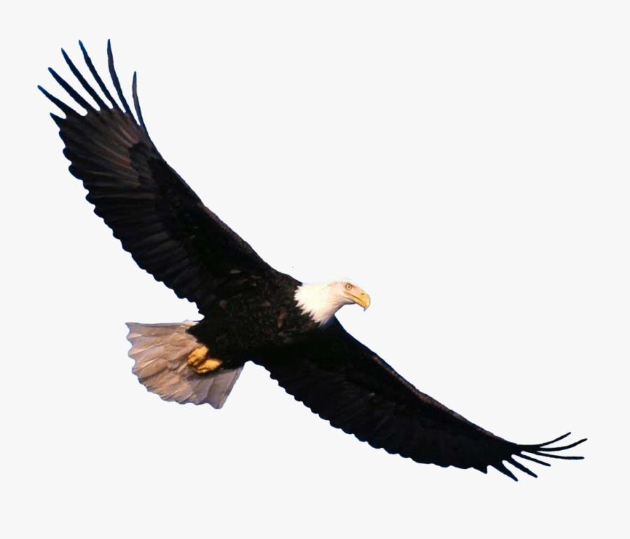 Transparent Bald Eagle Clipart - Bald Eagle Flying Png, Transparent Clipart