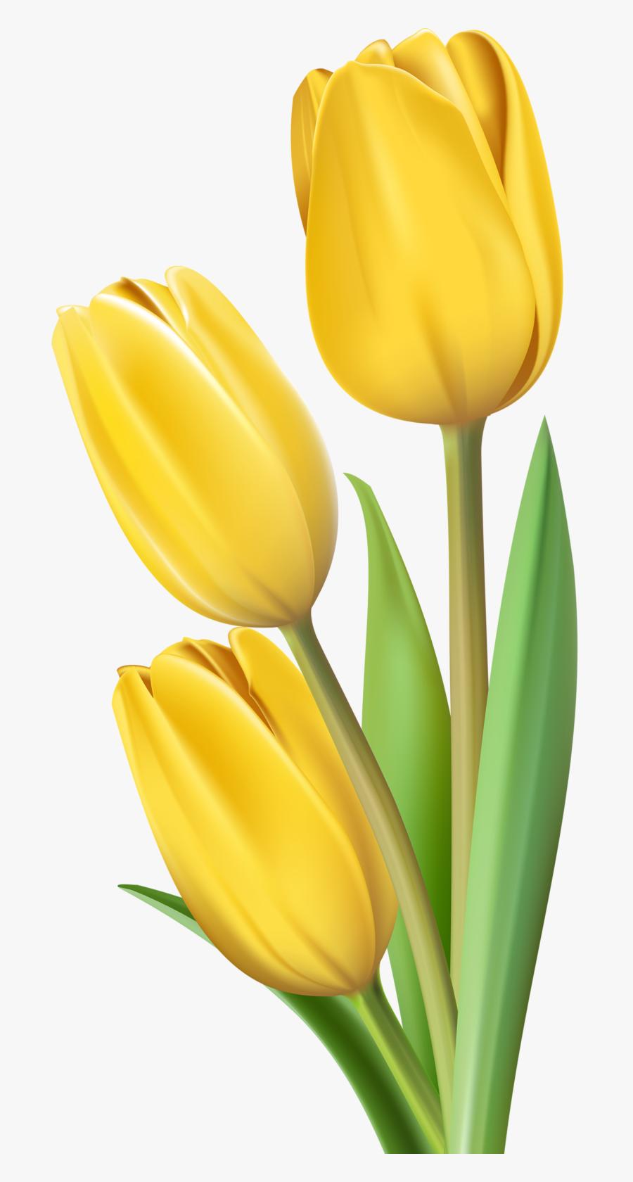 Фото, Автор Soloveika На Яндекс - Yellow Tulips No Background, Transparent Clipart