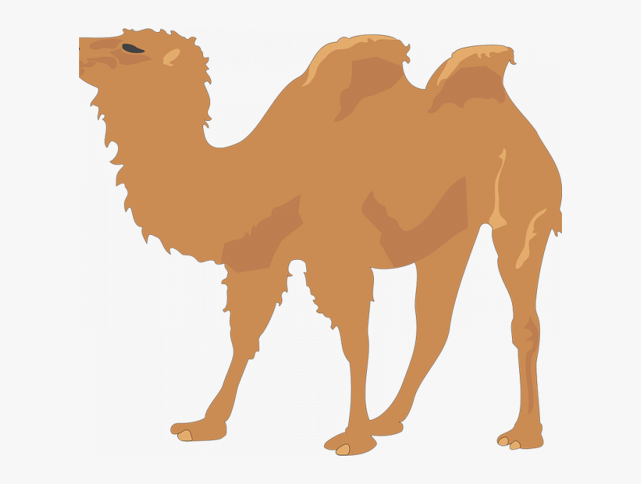 Transparent Camel Face Clipart - Camel Copyright Free, Transparent Clipart