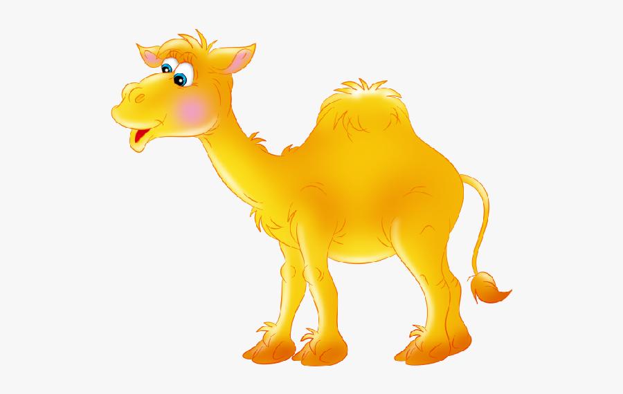 Funny Camel Pictures Clipart - Верблюд Картинка На Прозрачном Фоне, Transparent Clipart