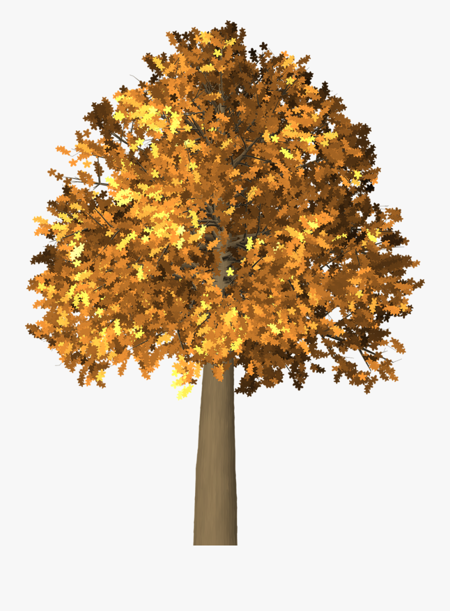 Tree, Leaves, Autumn, Fall, Branches, Isolated, Nature - Autumn, Transparent Clipart
