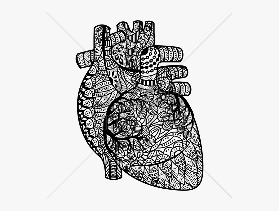 Anatomical Heart Pictures And Cliparts, Download Free - Human Heart Coloring Pages For Adults, Transparent Clipart