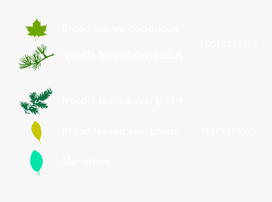 Green Maple Leaf, Transparent Clipart