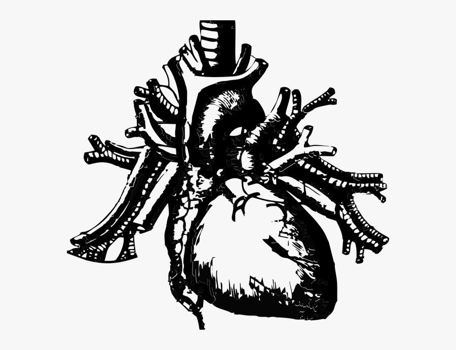 Black Lung Disease Market - Real Heart Transparent Background, Transparent Clipart
