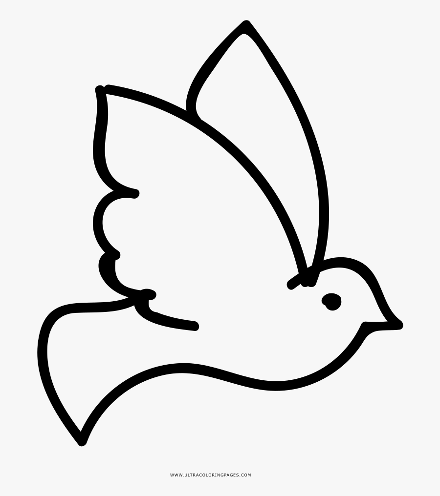 Rock Dove Columbidae Coloring Book Drawing Ausmalbild - Espirito Santo Para Colorir, Transparent Clipart