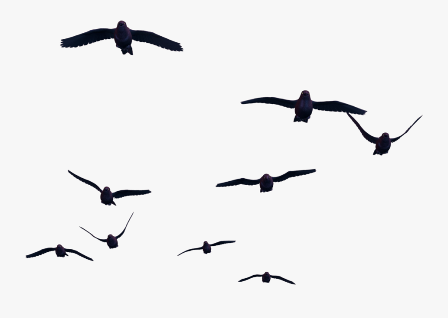 Thumb Image - Birds Png For Photoshop, Transparent Clipart