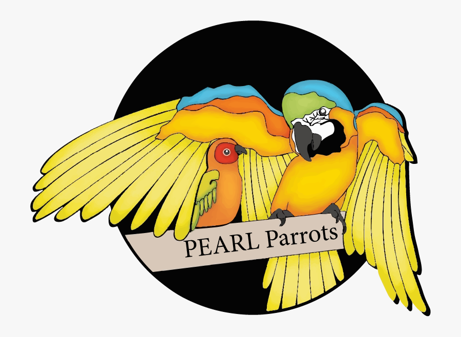 Pearl Parrots, Transparent Clipart