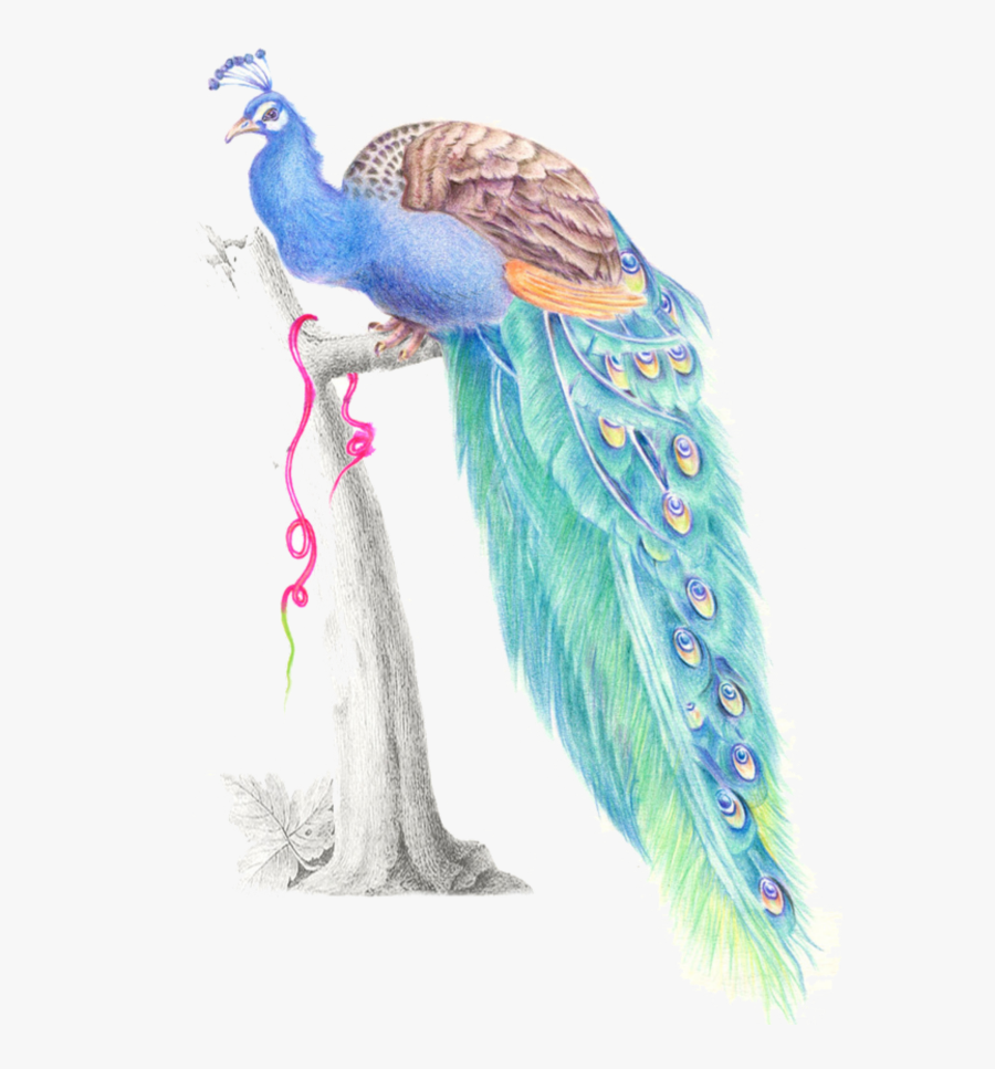 #mq #blue #birds #bird #peacock #watercolor - Peafowl, Transparent Clipart