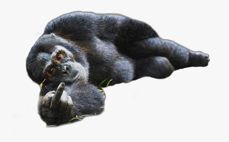 Freetoedit Sticker Chimp Chump - Photography Animal Comedy Wildlife, Transparent Clipart