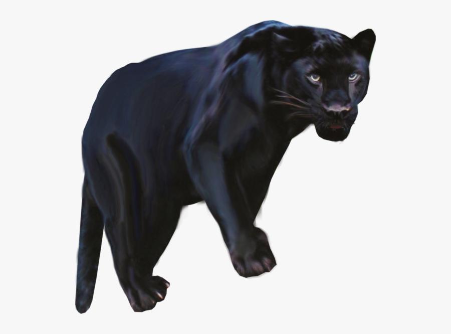 Pantera Animal Png Clipart Black Panther Leopard Jaguar - Black Panther Animal Png, Transparent Clipart