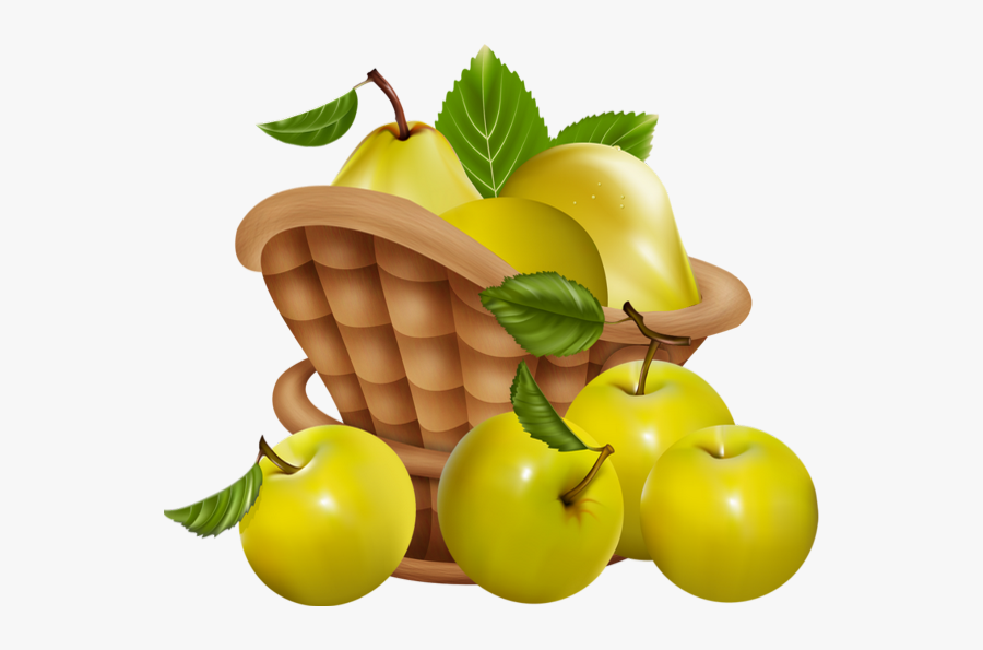 Pommes Png Dessin Tube Fruit Corbeille Apple Free Transparent Clipart Clipartkey