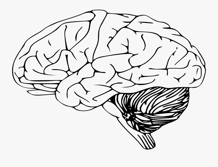 Human Brain Clip Art - Brain Clipart Black And White, Transparent Clipart