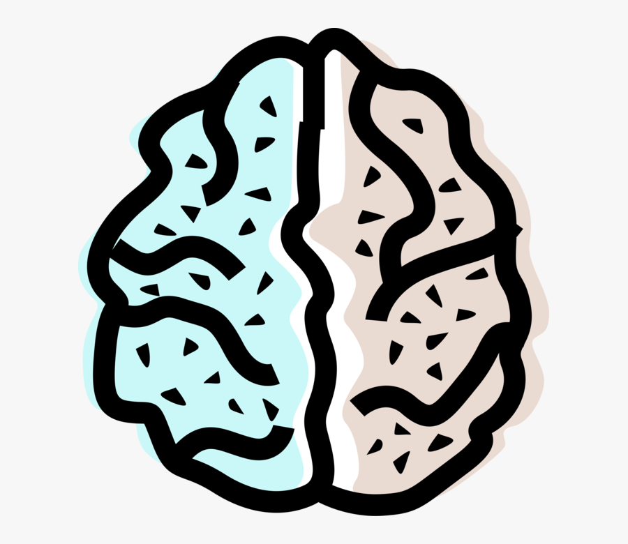 Vector Illustration Of Human Brain Left And Right Hemisphere, Transparent Clipart