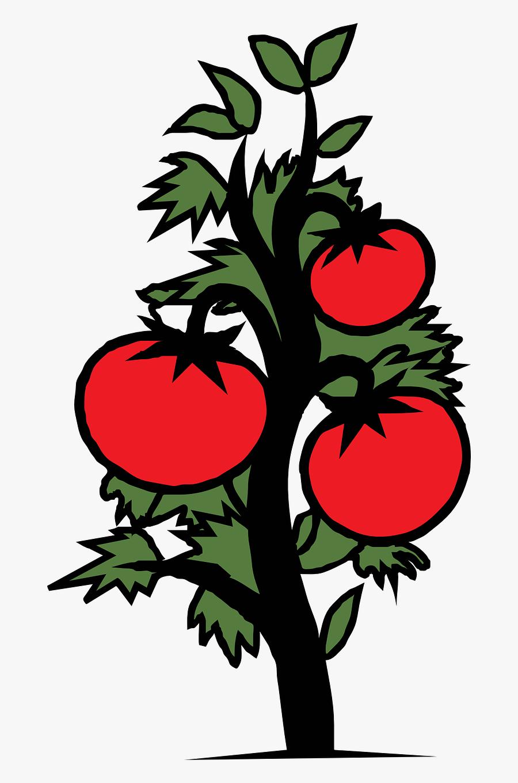 Tomato Plant Vegetable Free Picture - Tomato Plant Clip Art, Transparent Clipart
