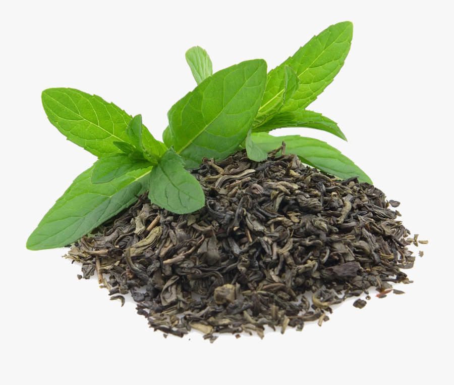 Green Tea Leaves Png Free Transparent Clipart Clipartkey