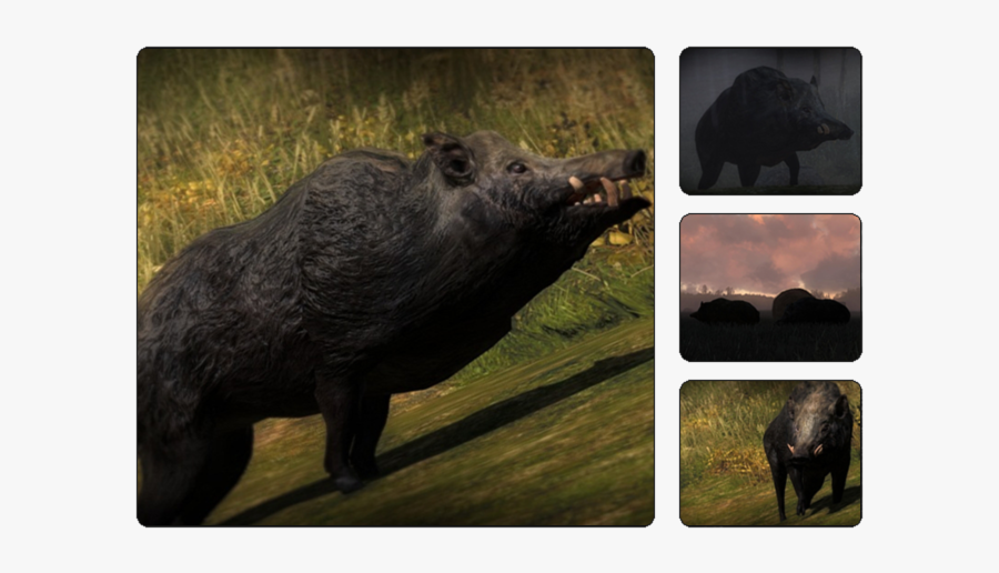 Thehunter Wikia - Hunter Call Of The Wild Boar, Transparent Clipart