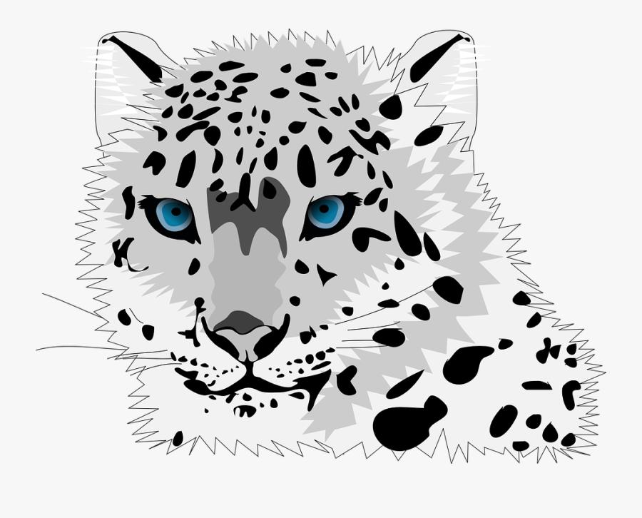 Animal, Cat, Leopard, Snow Leopard, Wild Cat - Snow Leopard Clip Art, Transparent Clipart