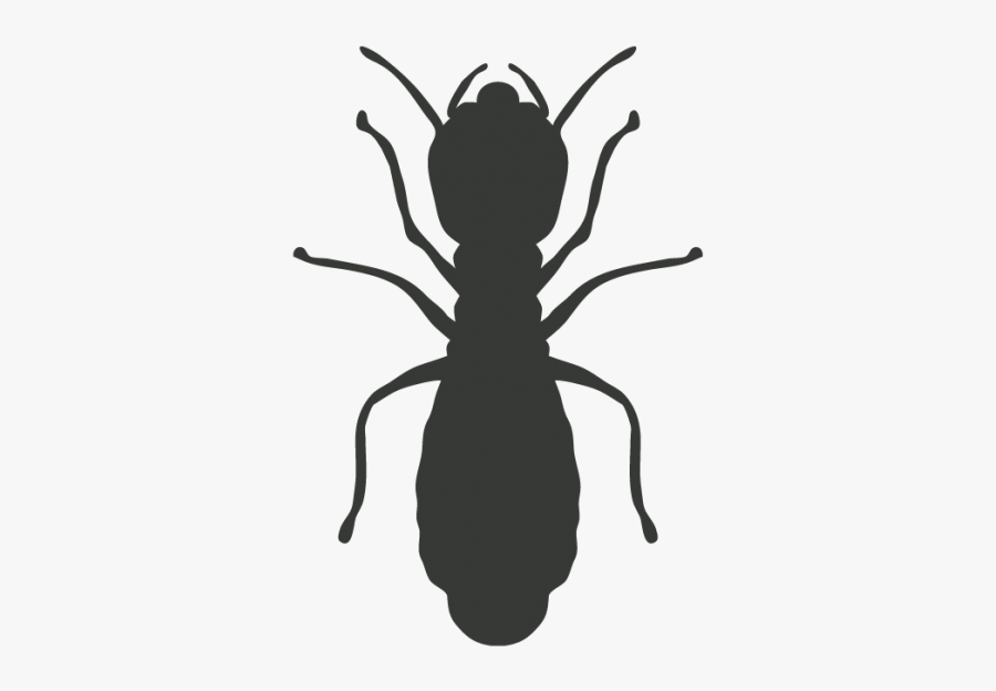 Cockroach Mosquito Pest Control Termite - Termitas Png, Transparent Clipart
