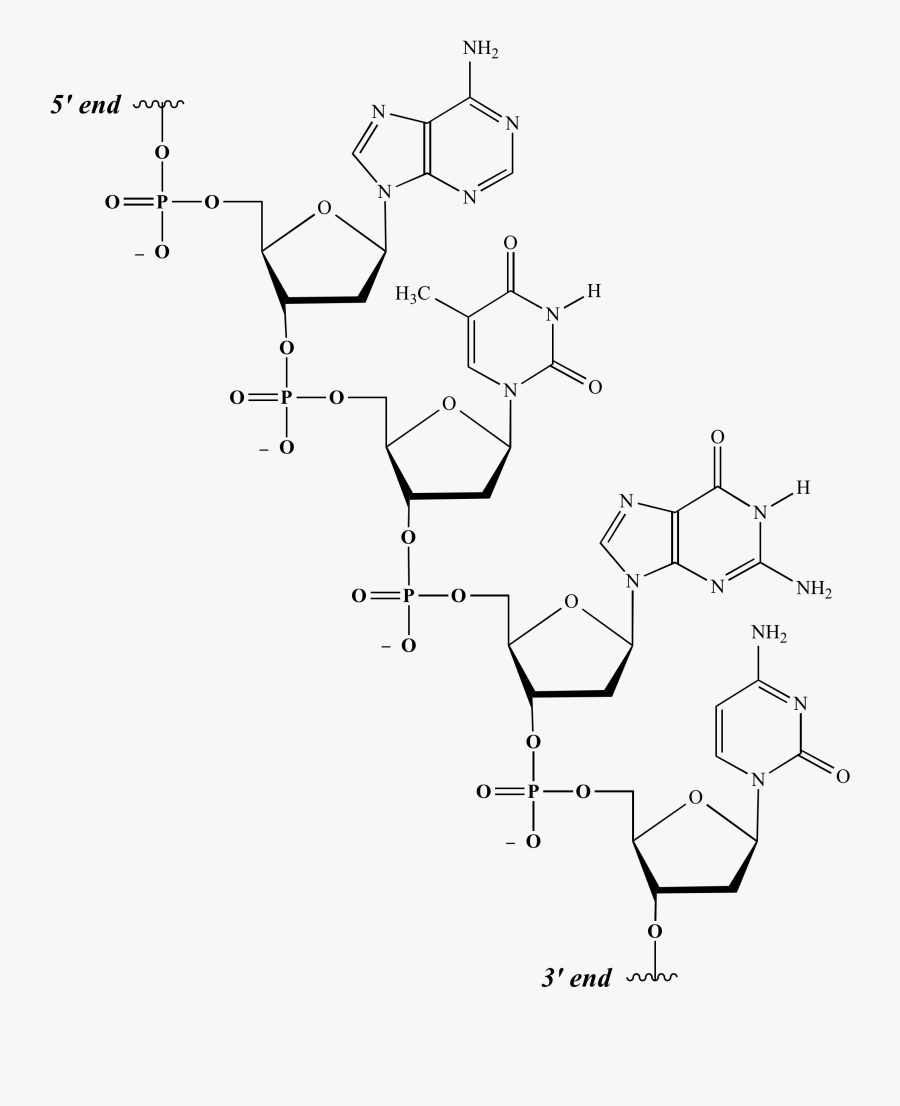 Compound Drawing Nucleic Acid Structure Huge Freebie - Primary Structure Chemical Structure, Transparent Clipart