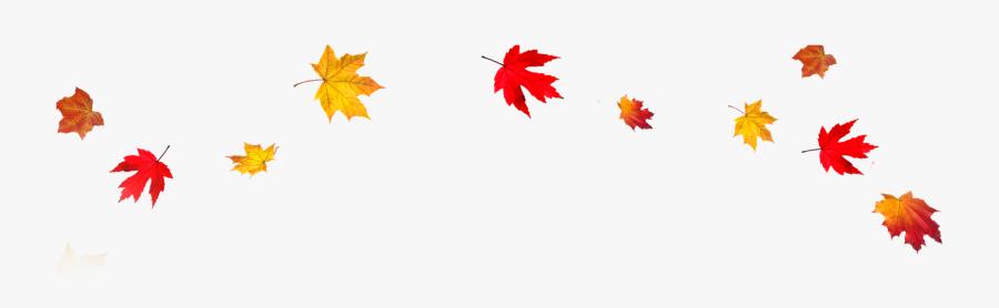 Fall Leaves Design - Transparent Background Autumn Leaves Clipart, Transparent Clipart