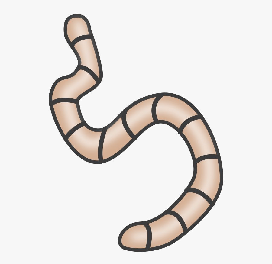 Reptile,line,worm - Worms Clipart, Transparent Clipart