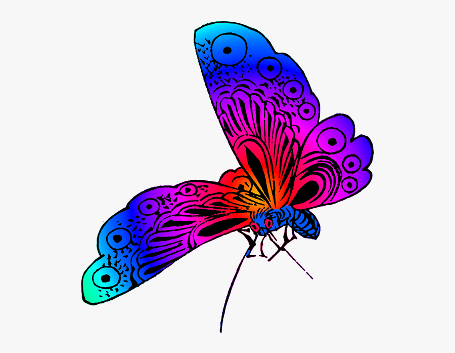 Beautiful Butterfly Image - Different Colors Of Butterfly, Transparent Clipart