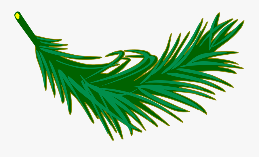 Branch Frond Leaf Leafy Leaves Palm Plant - Palm Leaves Clip Art, Transparent Clipart