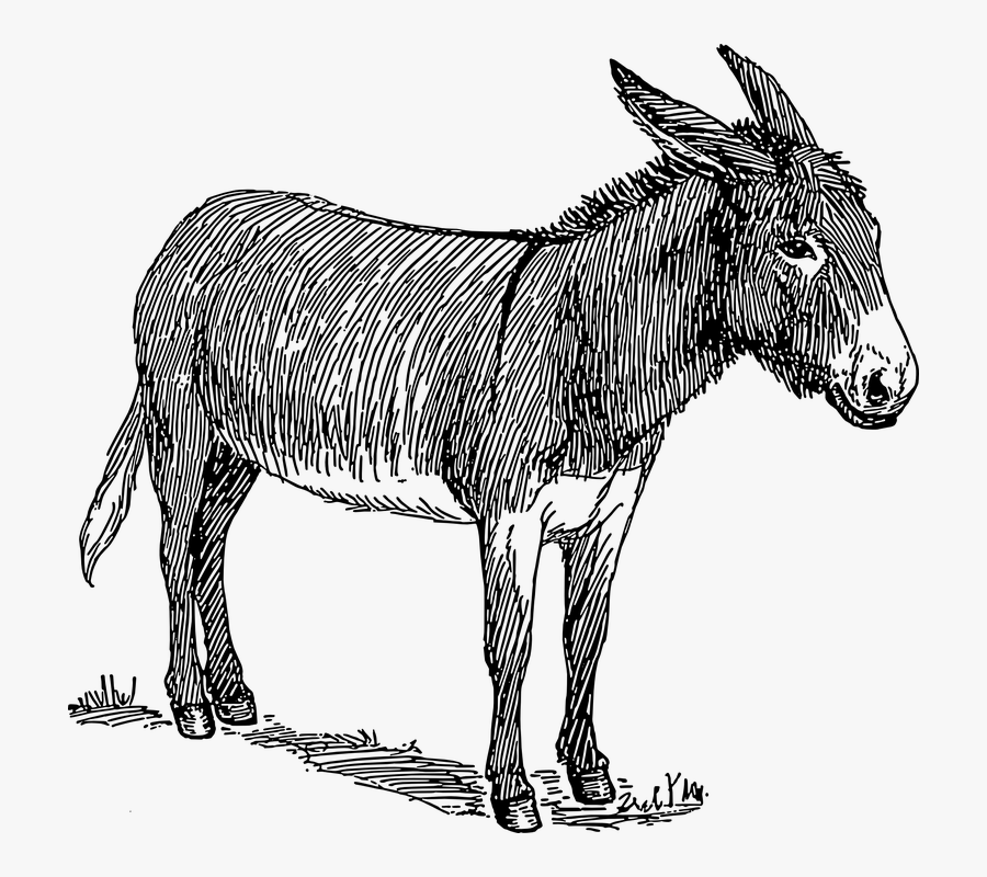 Free Donkey Clipart Black And White, Transparent Clipart