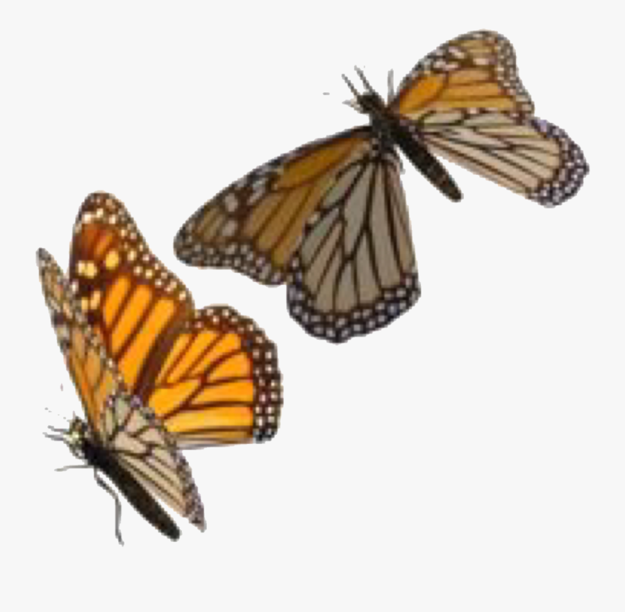 Swarm Of Butterflies | Transparent PNG Download #5022202 - Vippng