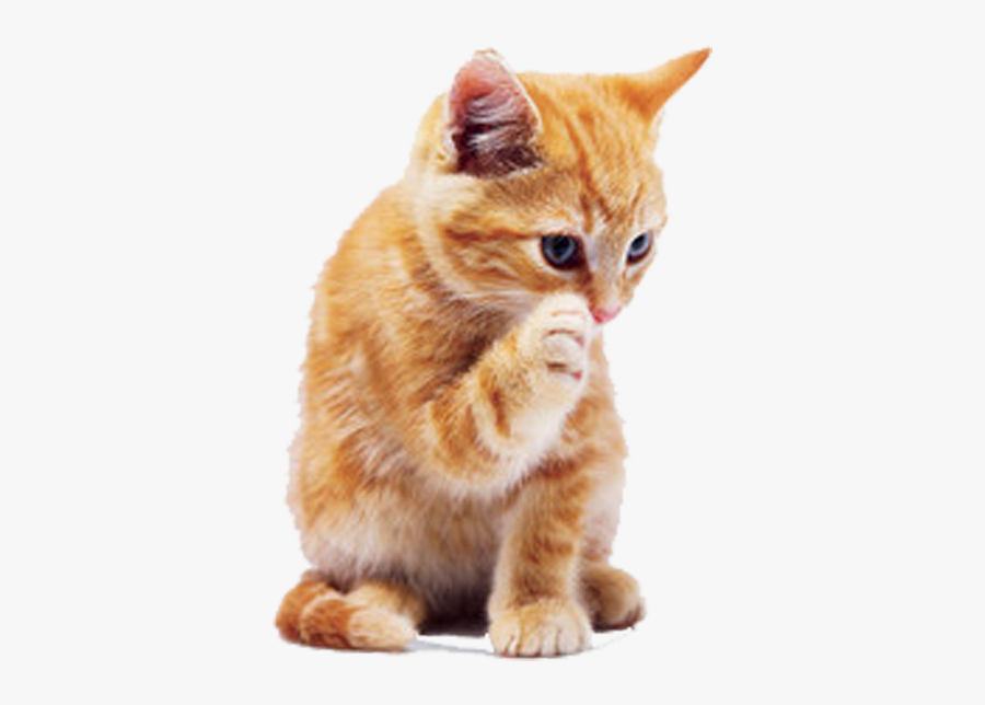 Tabby Cat Dog Puppy Pet - Ginger Cat Transparent Background, Transparent Clipart