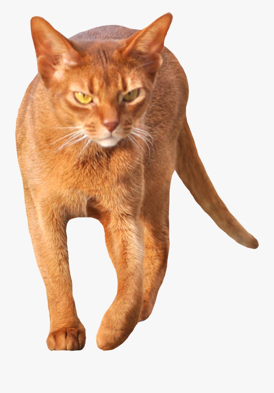 Tabby Cat Clipart Transparent - Walking Cat Cut Out, Transparent Clipart