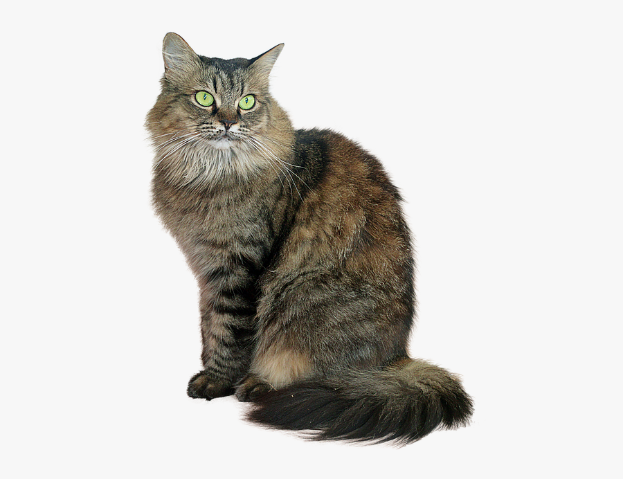 Tabby Cat Png - Transparent Tabby Cat Png, Transparent Clipart