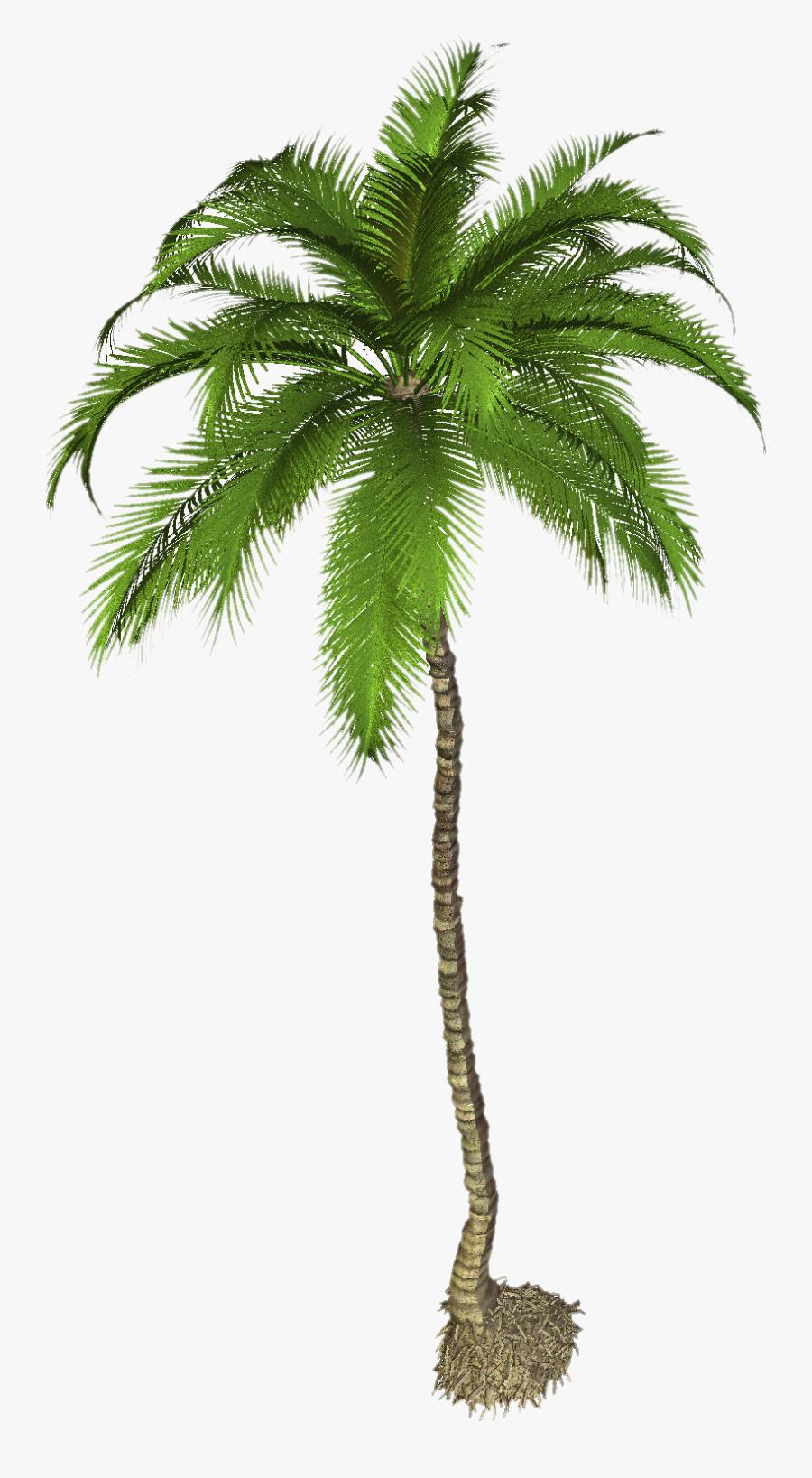 Palm Tree High Resolution, Transparent Clipart