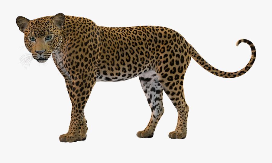 Transparent Cheetah Print Clipart - Leopard Silhouette Png, Transparent Clipart