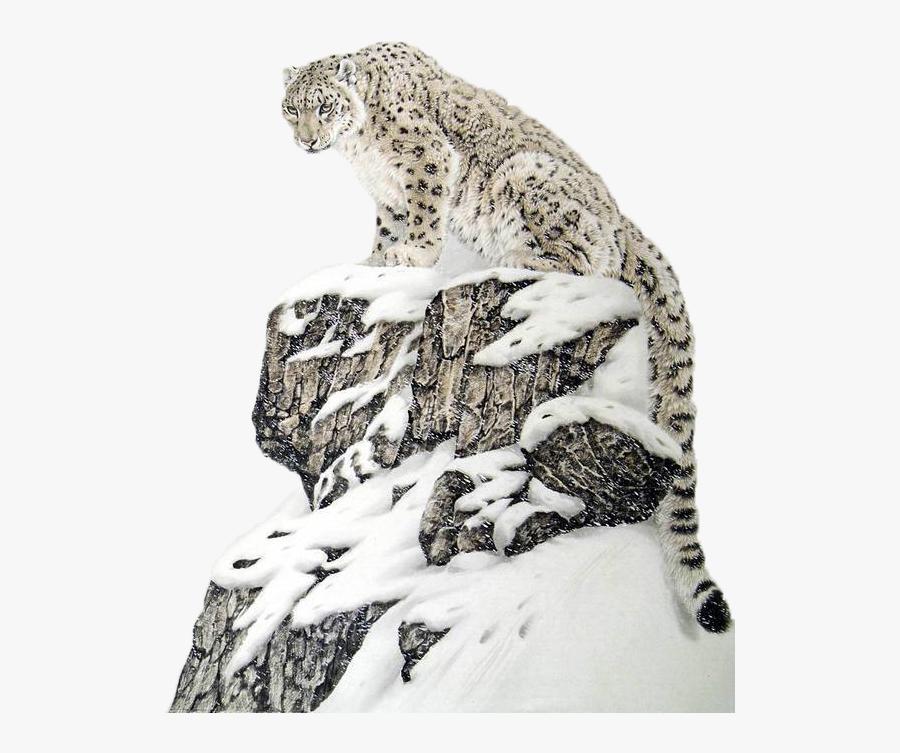 Transparent Cheetah Png - Snow Leopard Beautiful, Transparent Clipart