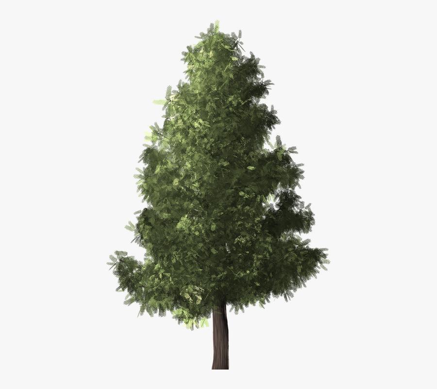 Tree,white Pine,shortleaf Black Spruce,yellow Fir,oregon - Conifers Non Flowering Plants, Transparent Clipart