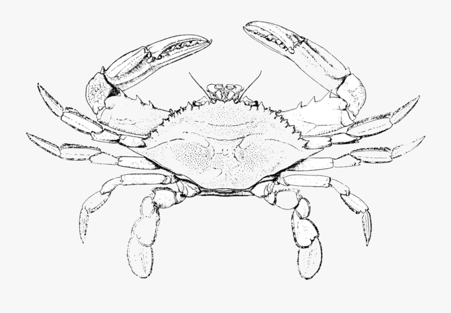 Drawn Pinart Hand Cartoon - Blue Crab Coloring Pages, Transparent Clipart