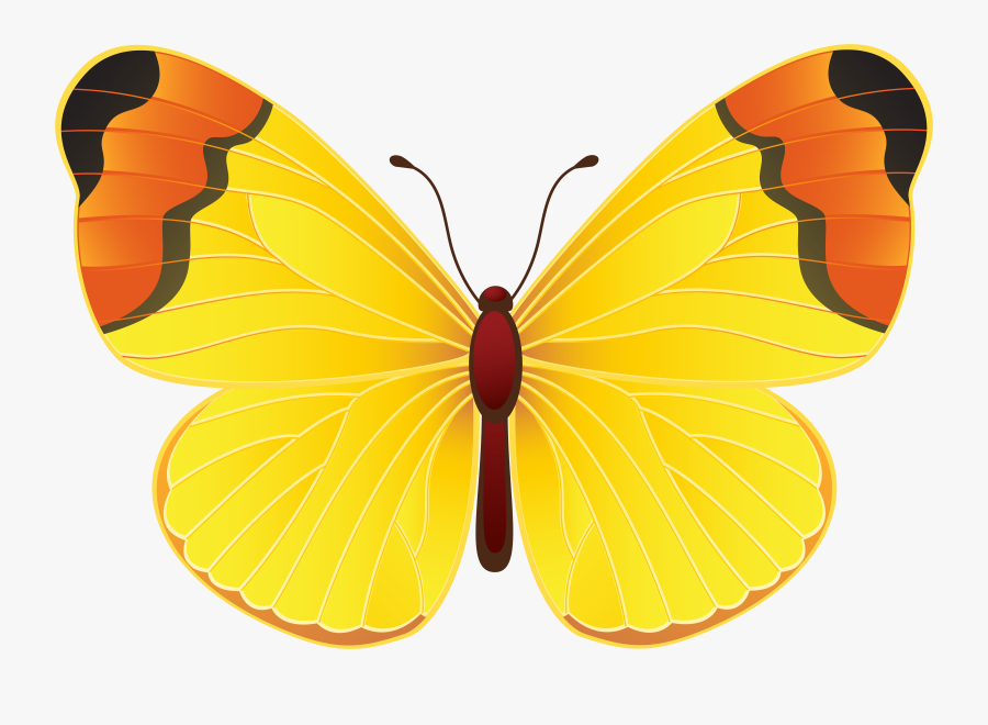 Download Free Clipart With - Yellow Butterfly Png, Transparent Clipart