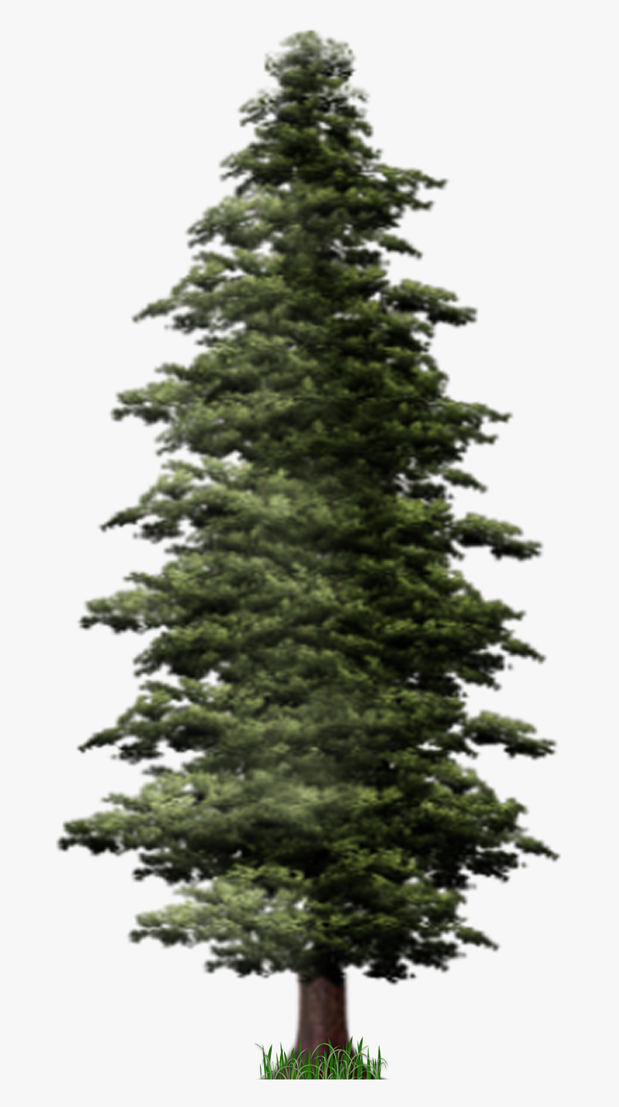 Tall Pine Tree Silhouette Download - Pine Trees Hd Png, Transparent Clipart