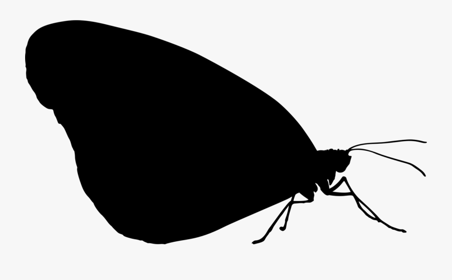 Photography - Transparent Insect Silhouette, Transparent Clipart