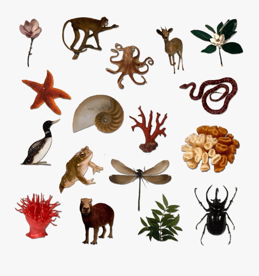 Silhouettes Of Many Living Things - Free Download Image Of Living Things, Transparent Clipart