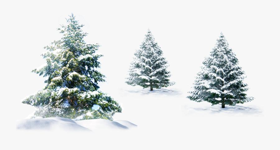 Polar Bear Christmas Tree Christmas Tree - Pine Trees Snow Png, Transparent Clipart