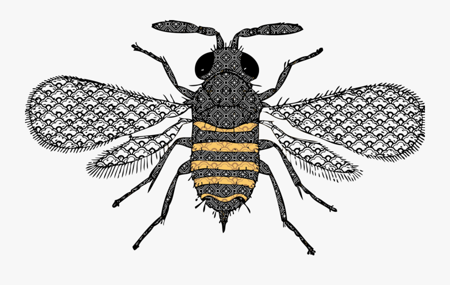 Fly,honey Bee,pollinator - Bee Detailed, Transparent Clipart