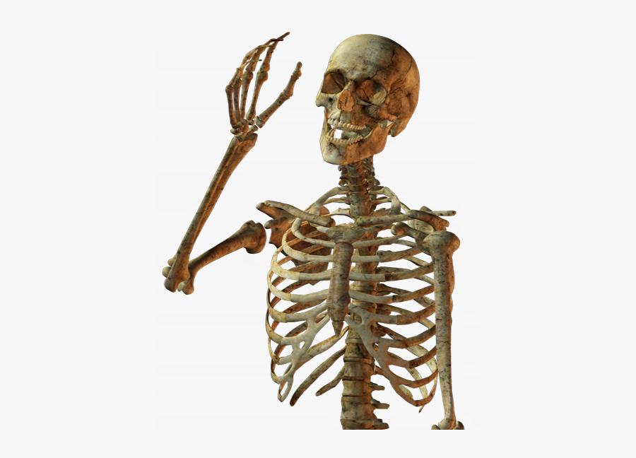Calavera Human Skull Skeleton Free Download Png Hd - Human Skeleton Png, Transparent Clipart