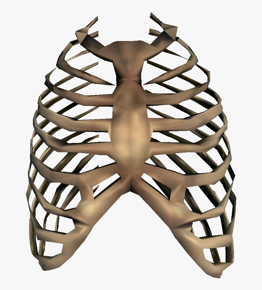 Collection Of Free Bone Drawing Rib Cage Download On - Rib Cage Transparent, Transparent Clipart