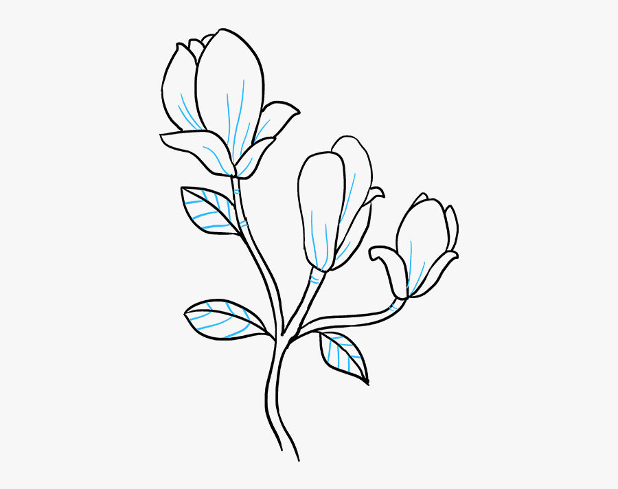 Clip Art How To Draw A Magnolia Flower - Easy To Draw Magnolia Flower, Transparent Clipart