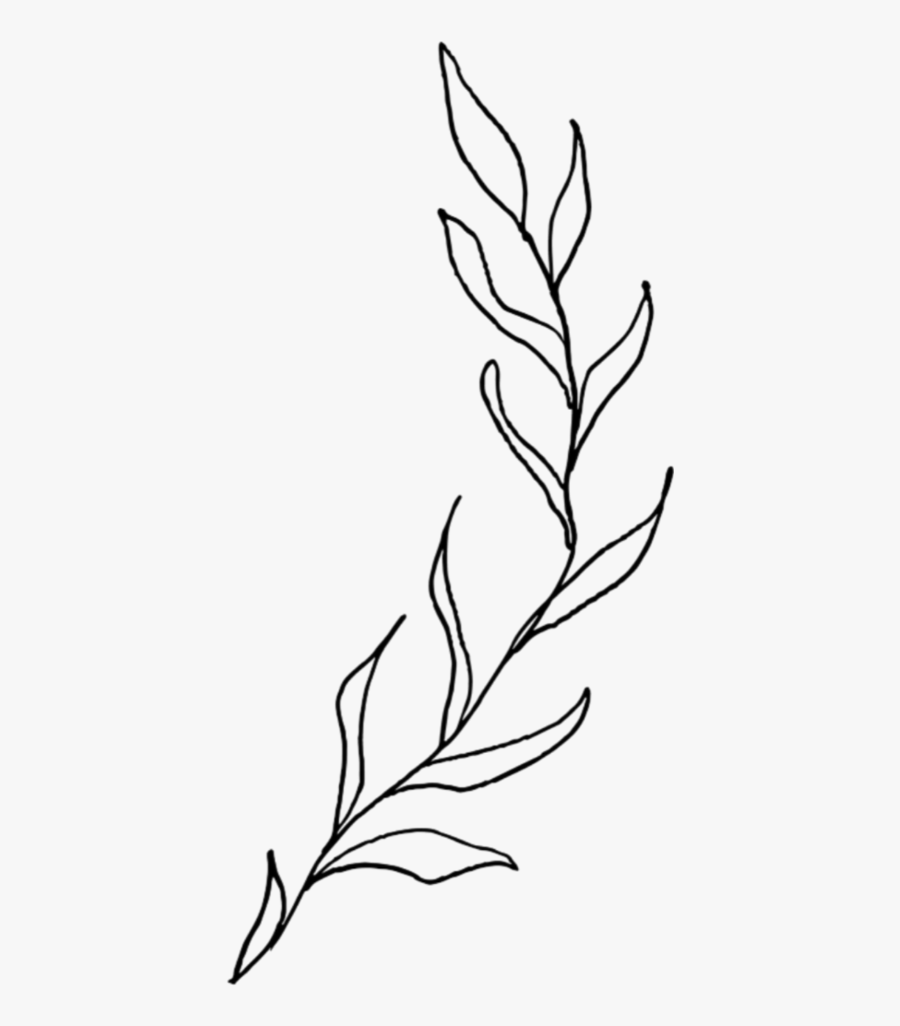 Plant Plants Overlay Doddle Black White Simple Aesthetic Plant Line Drawing Free Transparent Clipart Clipartkey